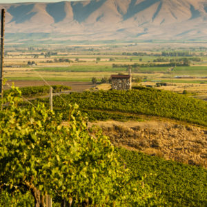 USA, Washington, Mabton. Red Willow vineyard supplies grapes to many of Washington's highest rated wines.