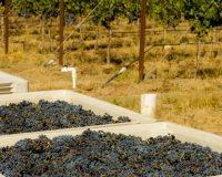 Winery Spotlight ~ Tapteil Vineyard Winery