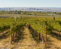The Future Looks Bright for Washington Wines