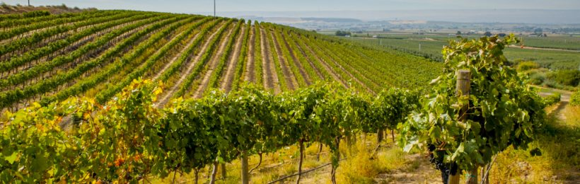 Washington, a red wine state, continues to focus on blends