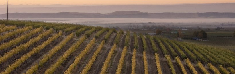 Vineyard location, elevation, aspect — all work together