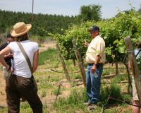 A Sense of Place – Summer Vineyard Tour