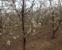 Spring is springing at Pardisos del Sol winery
