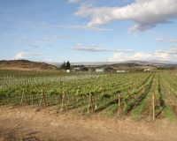 Wilridge Winery focuses on diversity @ Winemaker's Table