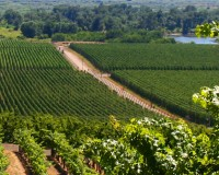 Study showcases Yakima Valley AVA'S impact to Washington's Wine Industry