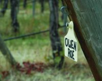 Owen Roe Winery's new releases featured