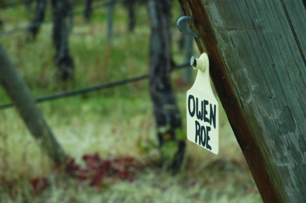 Vineyard tag