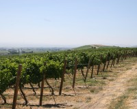 A Brief History of Wine in the Yakima Valley