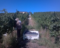 Harvest Report ~ September 13, 2012