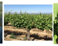 Yakima Valley grapes have begun their maturation process.