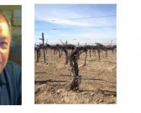 Five Vines in the Yakima Valley AVA