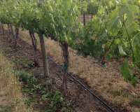 Warm Spring Keeps Growers Busy
