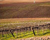 The Yakima Valley AVA is home to more than 30% of Washington's vineyard acreage