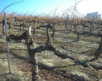 Vineyard Spotlight: Upland Estates' Todd Newhouse explains Pruning 101