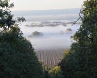 Upland Vineyard Tour ~ Cultivated in Tradition