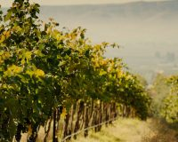 Single vineyard wines that will awaken your senses